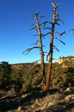 alberi guasti Fotografia Stock