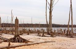 Alberi guasti intorno ad un lago Immagini Stock