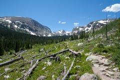 Alberi guasti in montagne rocciose Fotografia Stock
