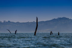 Alberi guasti nel lago - (Spacchi il tono ed il fuoco selettivo) Immagini Stock Libere da Diritti