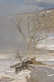 Alberi guasti in sorgenti calde Fotografia Stock Libera da Diritti