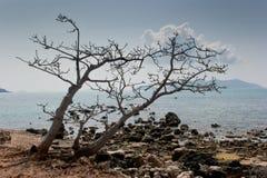 Alberi guasti sulla spiaggia. Immagini Stock Libere da Diritti