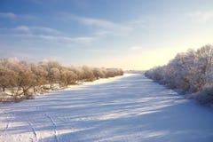Alberi in hoarfrost nel cielo blu scuro Fotografie Stock