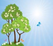 alberi idillici luminosi sboccianti del sole della sorgente di paesaggio della priorità bassa Fotografia Stock Libera da Diritti