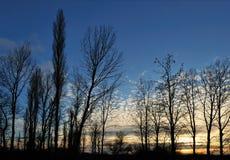 alberi illuminati fotografie stock
