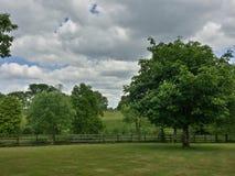 alberi inferiori del cielo del punto della foto Immagini Stock Libere da Diritti