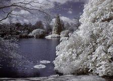 Alberi infrarossi Fotografie Stock Libere da Diritti