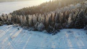 Alberi innevati aerei sparati sul fuco Metraggio di un paesaggio leggiadramente di inverno perfetto con un'abetaia sparata da sop video d archivio