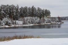 Alberi innevati bianchi nella foresta di inverno sulla riva del lago Immagini Stock