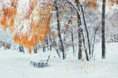 Alberi innevati con le foglie di autunno e banchi nel PA della città Fotografia Stock