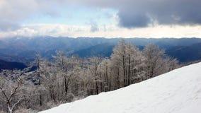 Alberi innevati contro le nuvole distanti di tempesta & della catena montuosa Fotografia Stock