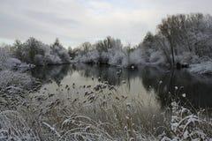 Alberi innevati dal lago in inverno Immagini Stock
