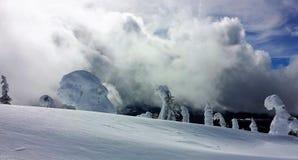 Alberi innevati della montagna con alba Immagini Stock