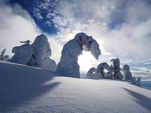 Alberi innevati della montagna nell'alto alpino un giorno soleggiato e blu Immagini Stock Libere da Diritti