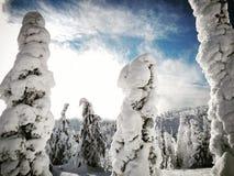 Alberi innevati della montagna su Sunny Winters Morning Fotografia Stock