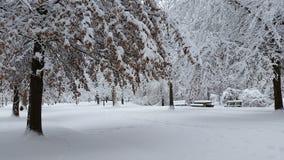Alberi innevati di inverno Immagini Stock