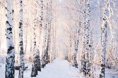 Alberi innevati nel paesaggio di inverno della foresta fotografia stock