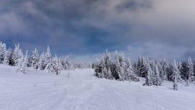 Alberi innevati su Ski Slopes dei picchi di Sun Immagine Stock Libera da Diritti