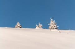Alberi innevati sul fondo del cielo blu Fotografia Stock