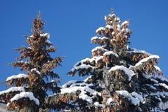 Alberi innevati un giorno di inverno pieno di sole Fotografia Stock