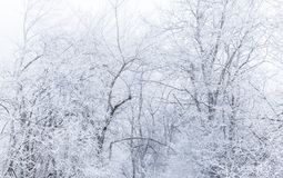Alberi innevati in una foresta fotografie stock libere da diritti