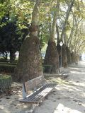 Alberi insoliti Platans della città di Oporto portugal fotografia stock libera da diritti