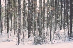 Alberi invernali a Boston Massachusetts fotografia stock