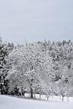 Alberi in inverno Immagine Stock