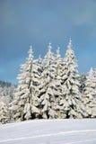 Alberi in inverno immagini stock