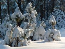 Alberi in inverno Fotografia Stock