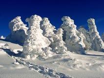 Alberi in inverno fotografie stock
