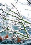 Alberi in inverno coperto in neve Immagini Stock