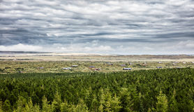 Alberi islandesi coniferi immagini stock