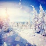 Alberi isolati dalla neve, fondo del paesaggio di inverno del bokeh con snowflak Fotografia Stock Libera da Diritti