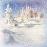 Alberi isolati dalla neve, fondo del paesaggio di inverno del bokeh con snowflak Immagine Stock Libera da Diritti