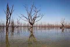 Alberi in lago immagini stock