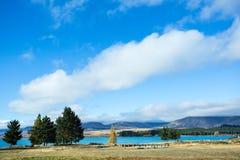 Alberi a Lakeside del lago Tekapo Immagini Stock