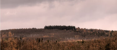 Alberi lunghi in foresta lontano fotografia stock