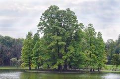 Alberi lungo acqua in parco Immagine Stock Libera da Diritti