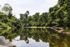 Alberi lungo e rocce in un fiume fotografia stock