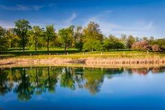 Alberi lungo il lago druid, al parco della collina del druido a Baltimora, Marylan Fotografia Stock