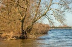 Alberi lungo l'acqua alla luce solare di pomeriggio Fotografia Stock Libera da Diritti