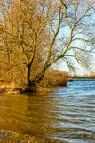 Alberi lungo l'acqua alla luce solare di pomeriggio Immagini Stock Libere da Diritti
