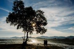 Alberi lungo l'uomo selvaggio nelle ombre quando il sole stava cadendo Fotografia Stock