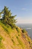 Alberi lungo la scogliera dell'oceano Fotografie Stock
