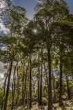 Alberi lungo la strada nel parco di Sintra fotografie stock