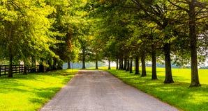 Alberi lungo un backroad rurale nella contea di York, Pensilvania fotografia stock libera da diritti