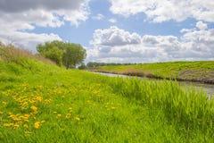 Alberi lungo un campo al sole in primavera Fotografie Stock