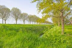 Alberi lungo un campo al sole in primavera Fotografia Stock Libera da Diritti