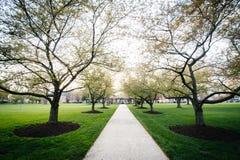 Alberi lungo un passaggio pedonale a Hood College, in Frederick, Maryland fotografie stock libere da diritti